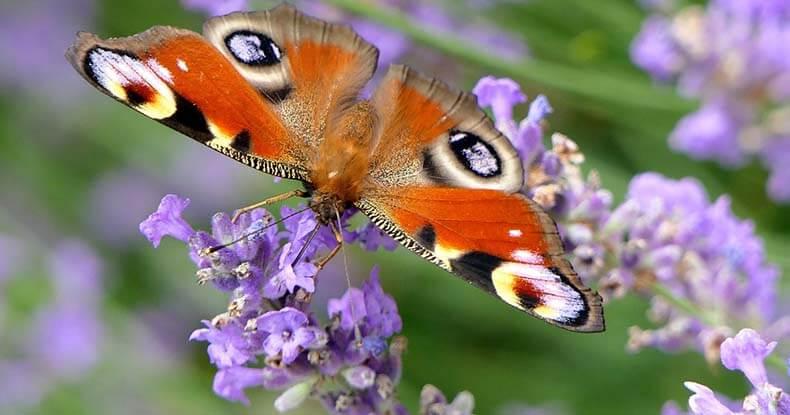 Trasformare la tua vita [ovvero da bruco a farfalla]